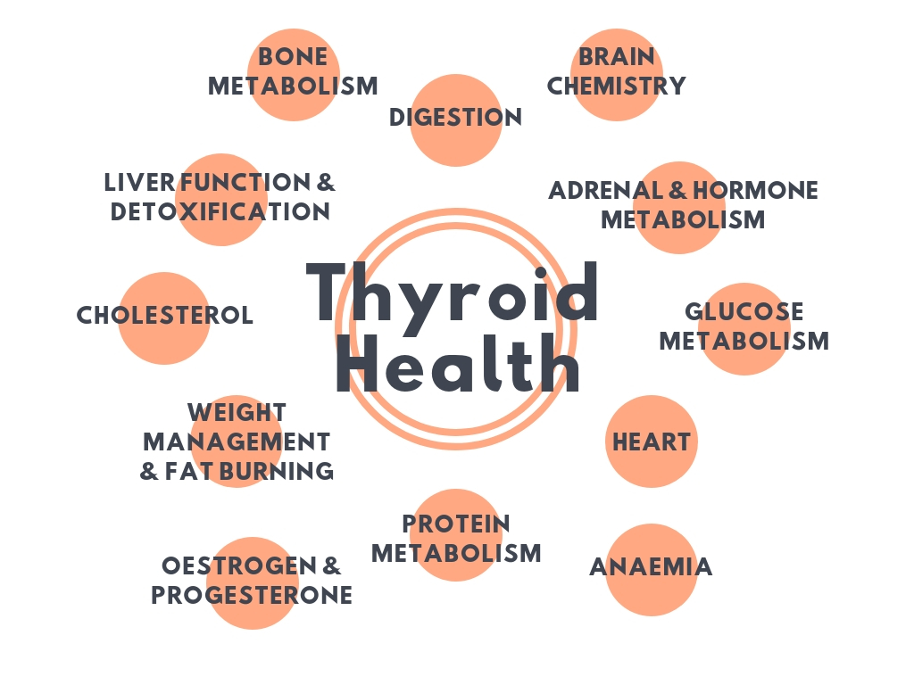 Thyroid Health.jpg