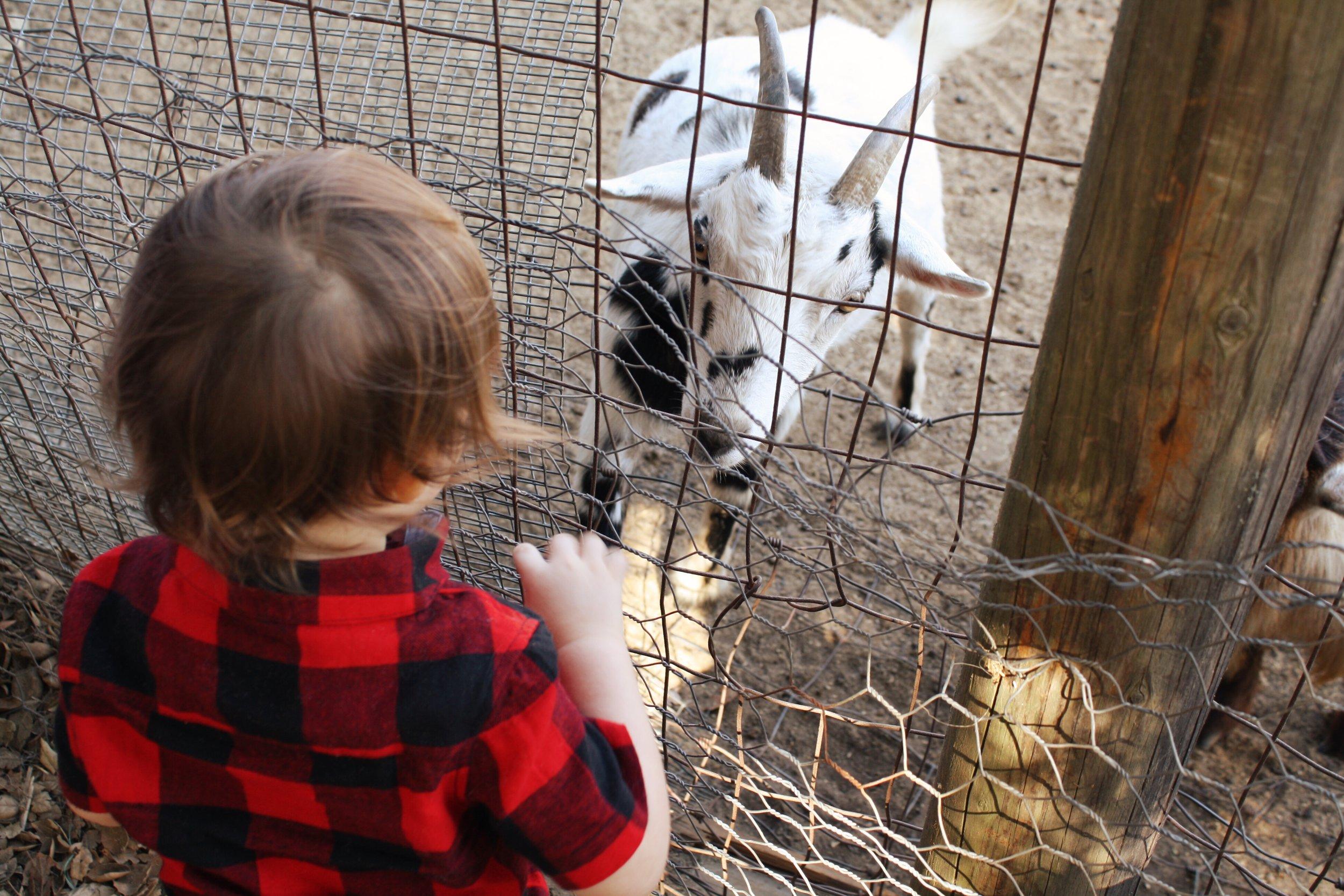 goatfriend.JPG