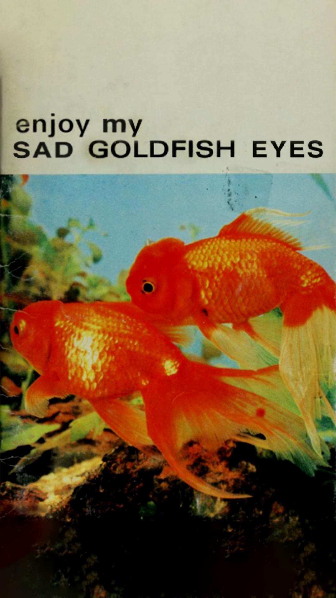 sadgoldfisheyes.jpg