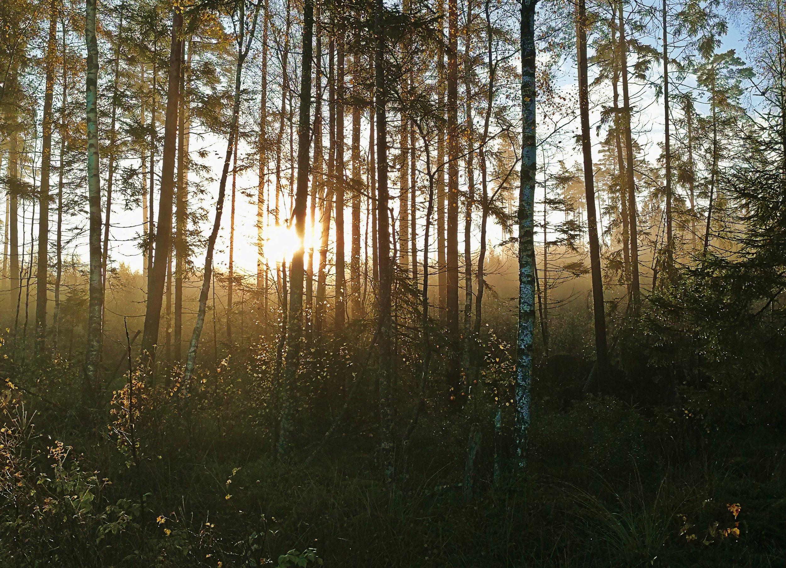 Foto Vara med naturen