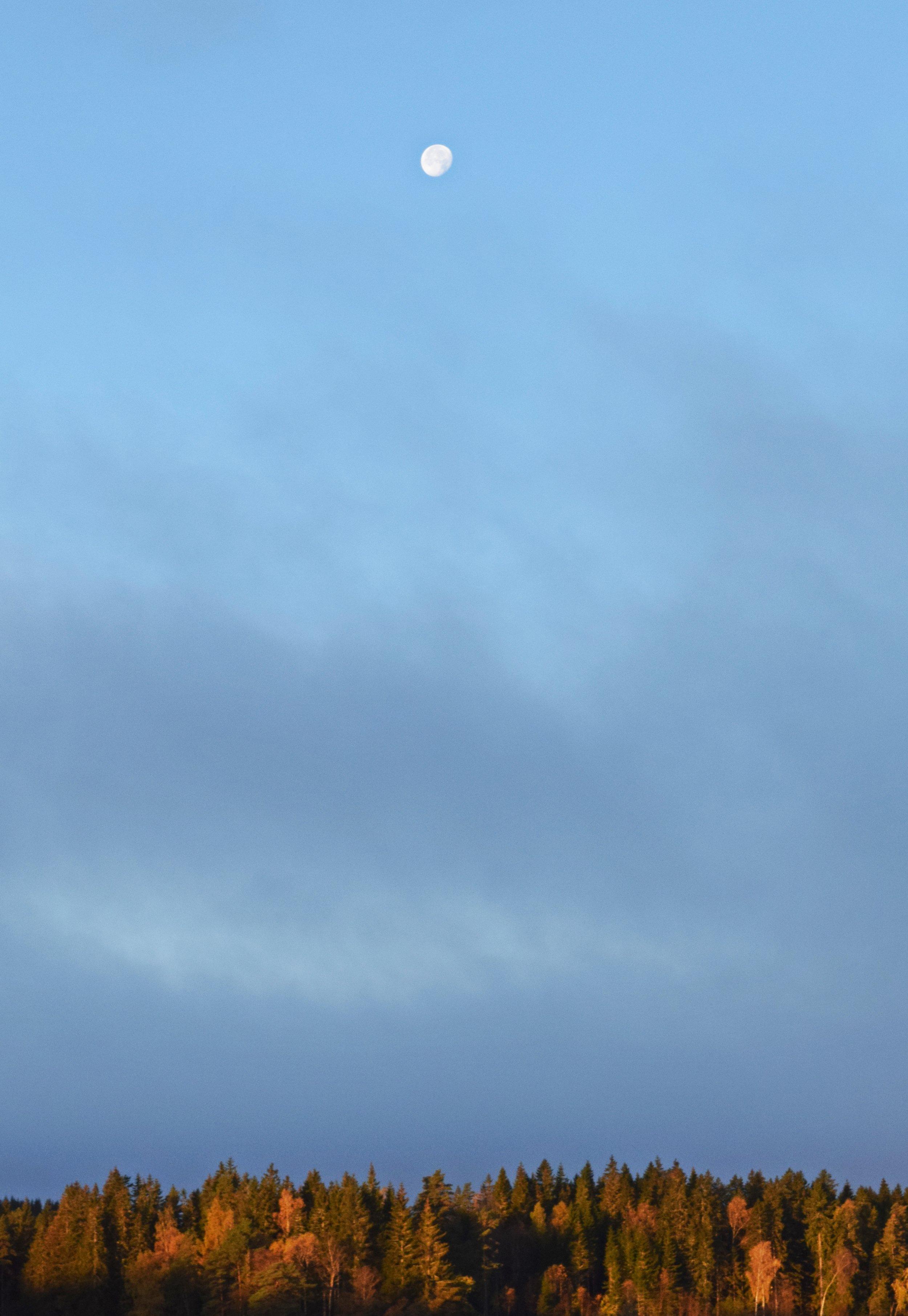 """En morgonmåne Foto: Vara med Nautren """""""