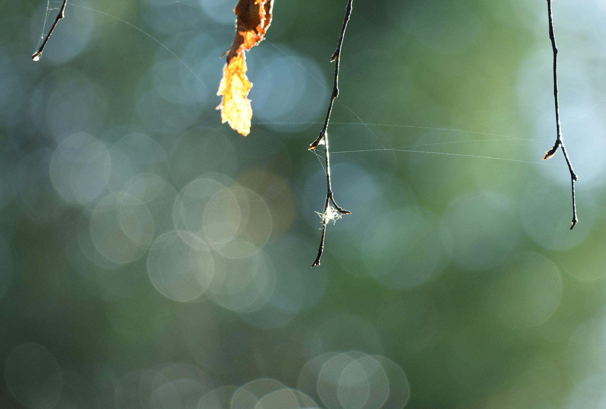 Foto: Vara med Naturen