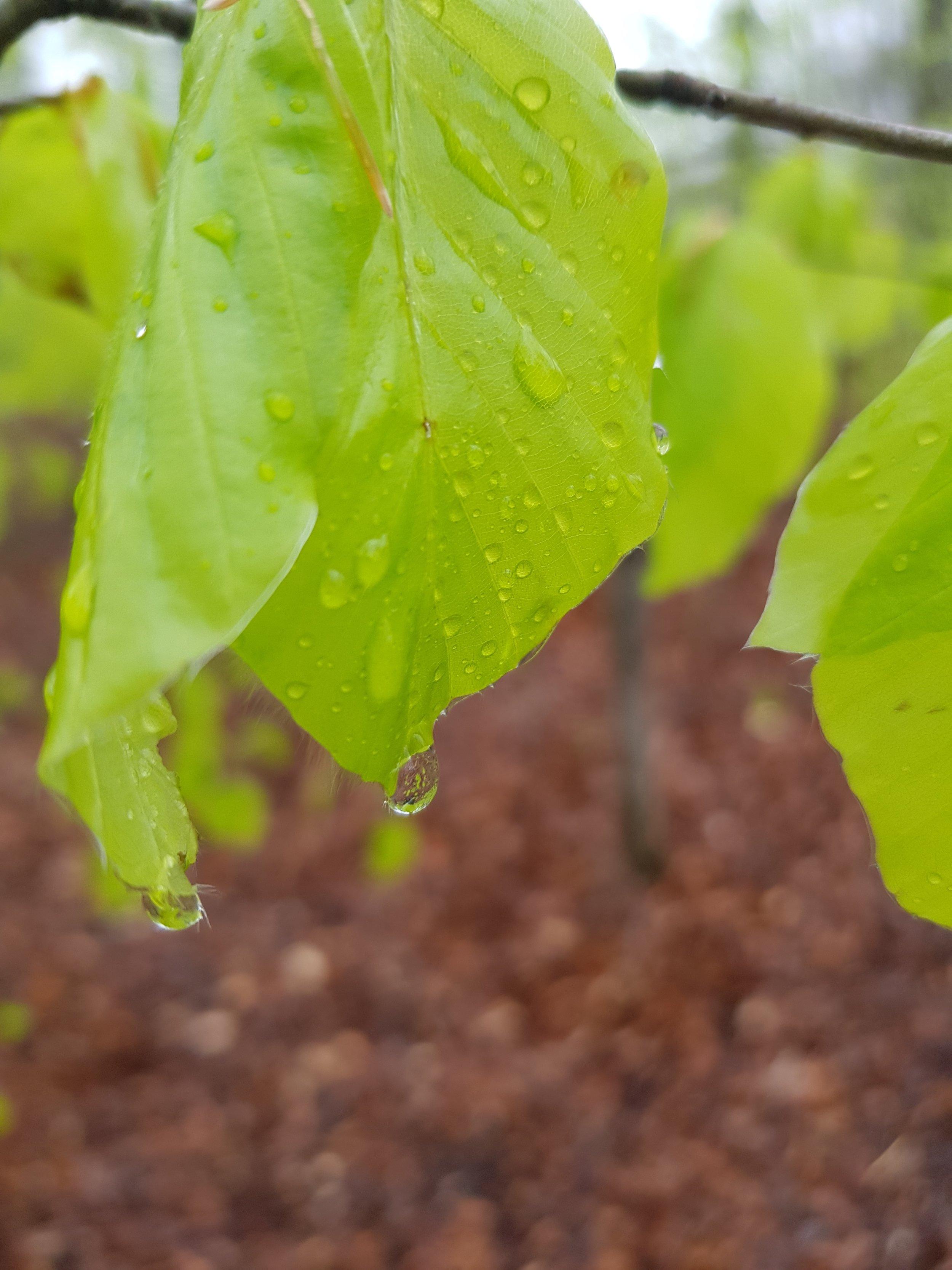 passion för regn