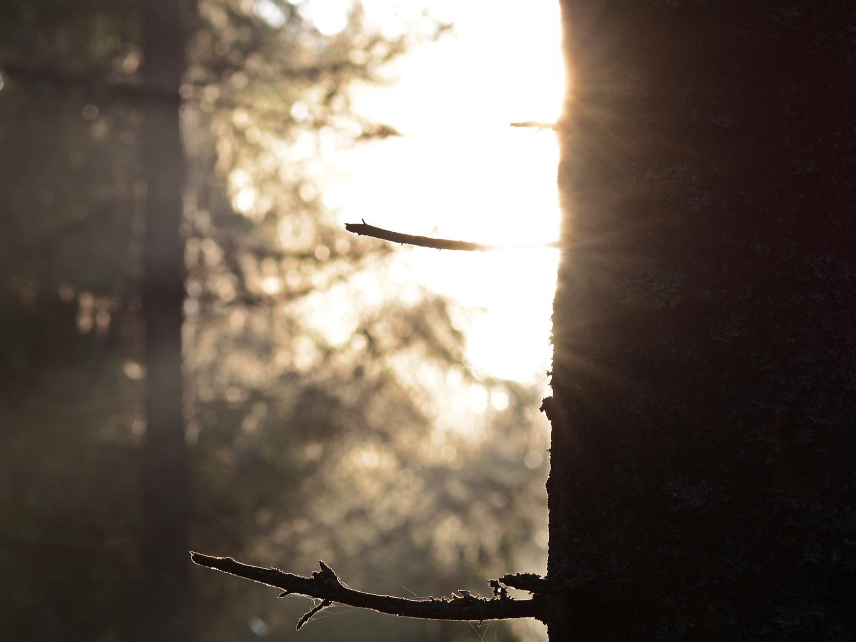 skogsljus, social vila