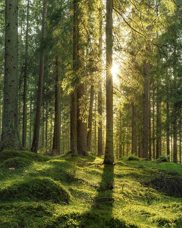 ÄVEN EN SKOG KAN BRINNA. Även en skog kan plötsligt försvinna. Som en människa med ett syrefattigt andetag. Ett mörker som utplånar allt. . ÄVEN EN SKOG KAN ÅTERIGEN VÄXA. Sällsynt flora kan spira ifrån svärtan. Som en människa som trots tomhet orkar skämta. Ett mod som lyser starkare än eldens lågor. En livskraft som väntar på att bli skapad. LIVET kämpar för oss alla! . . . . #psykiskhälsa #återhämtning #psykiskohälsa #utmattningssyndrom #utmattning #självledarskap #vila #skogen #stresshantering #skogsterapi #forestbathing #skog #skogspromenad  #närvaro #välmående #naturephotography #varamednaturen #mindfulness #mittlantliv #forest #mitt7 #minplats @hallbarlandsbygdsjuharad  #naturterapi #naturenläker #naturetherapy