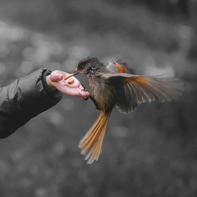 Att LYSSNA PÅ FÅGELSÅNG, har enligt studier en direkt koppling till minskad stressnivå, oro och depression. Under mina workshops får deltagarna därför ta sig en stund och bara lyssna. 🌿 DET ÄR SÅ ENKELT men också så svårt. Att stänga av allt görande och istället lyssna in vad ögonblicket har att erbjuda. Men lita på mig för genom att bjuda in naturen i vår enkla vardag, så kan vi skapa både stunder och hormoner av lycka👆😃 🌿 Har du också märkt att att fågelsång eller andra ljud i naturen får dig att må lite extra bra? . . . . #psykiskohälsa #utmattningssyndrom #utmattning #självledarskap #vila #skogen #stresshantering #antistress #lavskrika #naturenläker #naturenisverige #närvaro #välmående #naturephotography #varamednaturen #mindfulness #mittlantliv #naturterapi #naturenläker #naturetherapy #återhämtning #välbefinnande #psykiskhälsa #helalandetlever #landsbyggare #vipålandet #måbra #inrestyrka