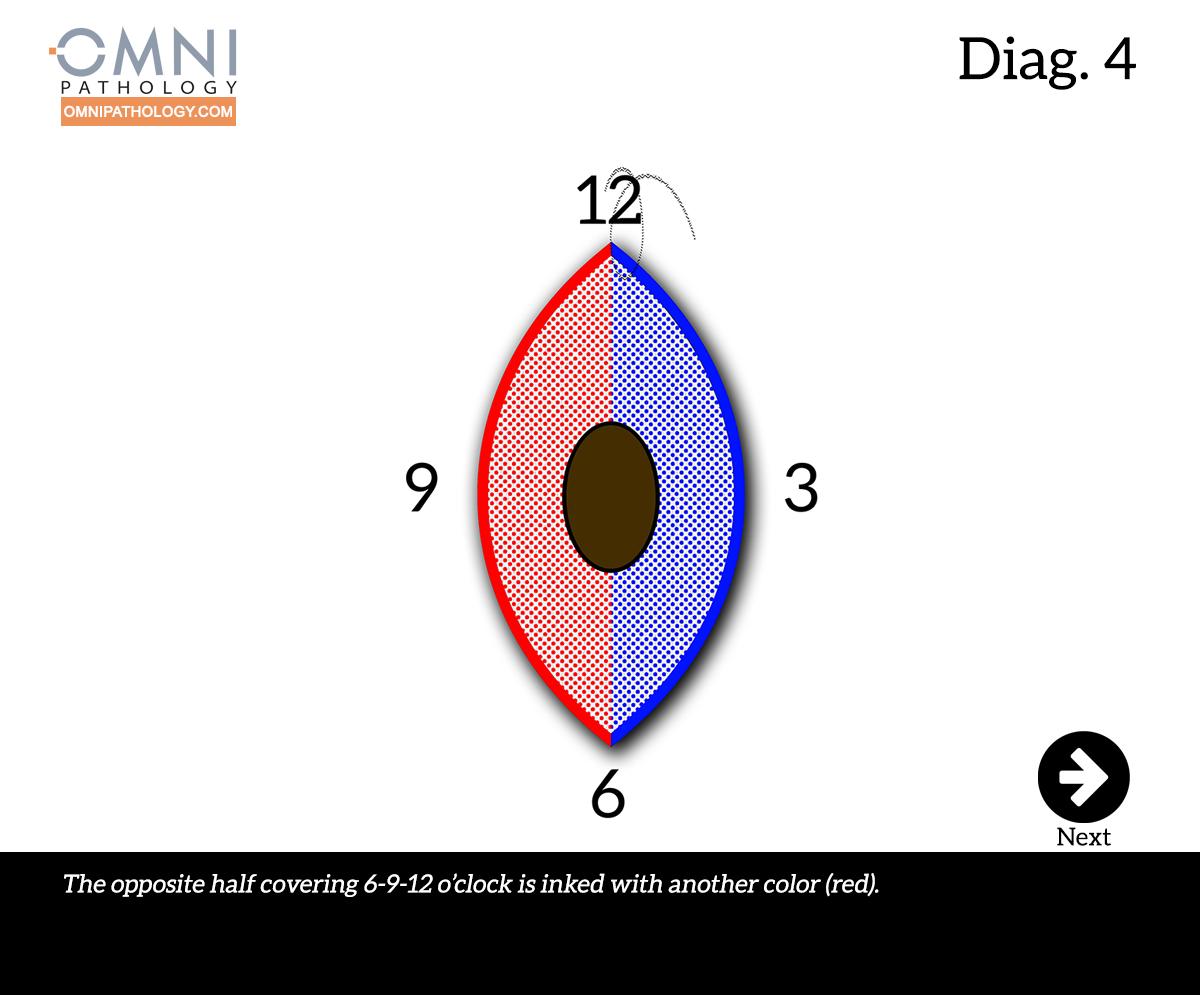 12-OclockEllipse-3(4inW)B.jpg