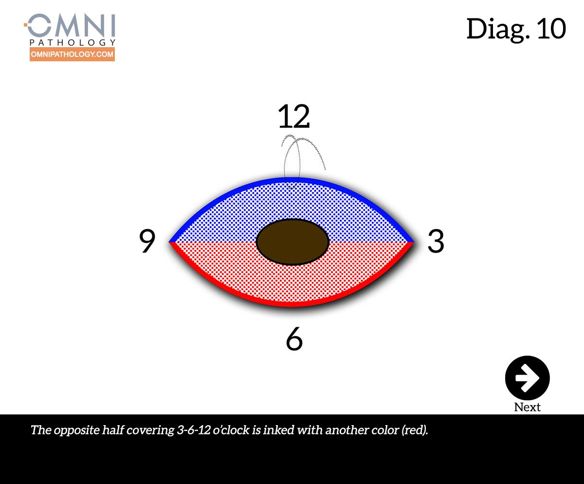 12-OclockEllipse-10(4inW)B.jpg