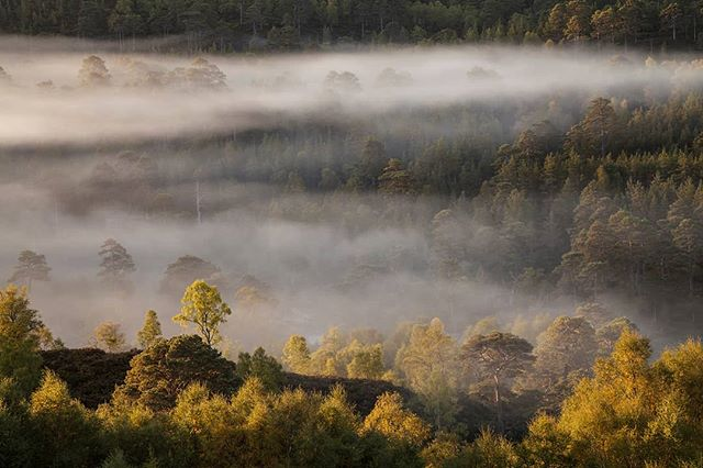 Take me back to this morning watching the sun rise over beautiful Caledonian pine forest. ❤ Glen Affric. #scotlandisnow