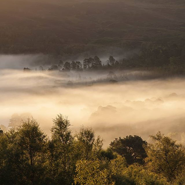 Here's another shot from that same beautiful morning down Glen Affric. The light was so intense and dramatic just as the sun popped over the surrounding mountains and caught all that swirling mist. #scotlandisnow