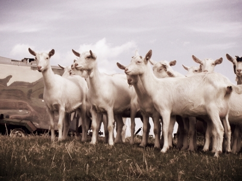 Wobbly Bottom Goat Farm