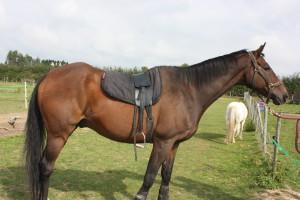 Total Contact Saddle the ultimate treeless saddle