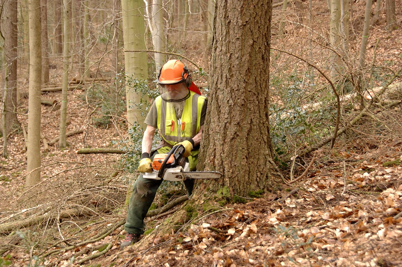 tree felling 5 db.jpg