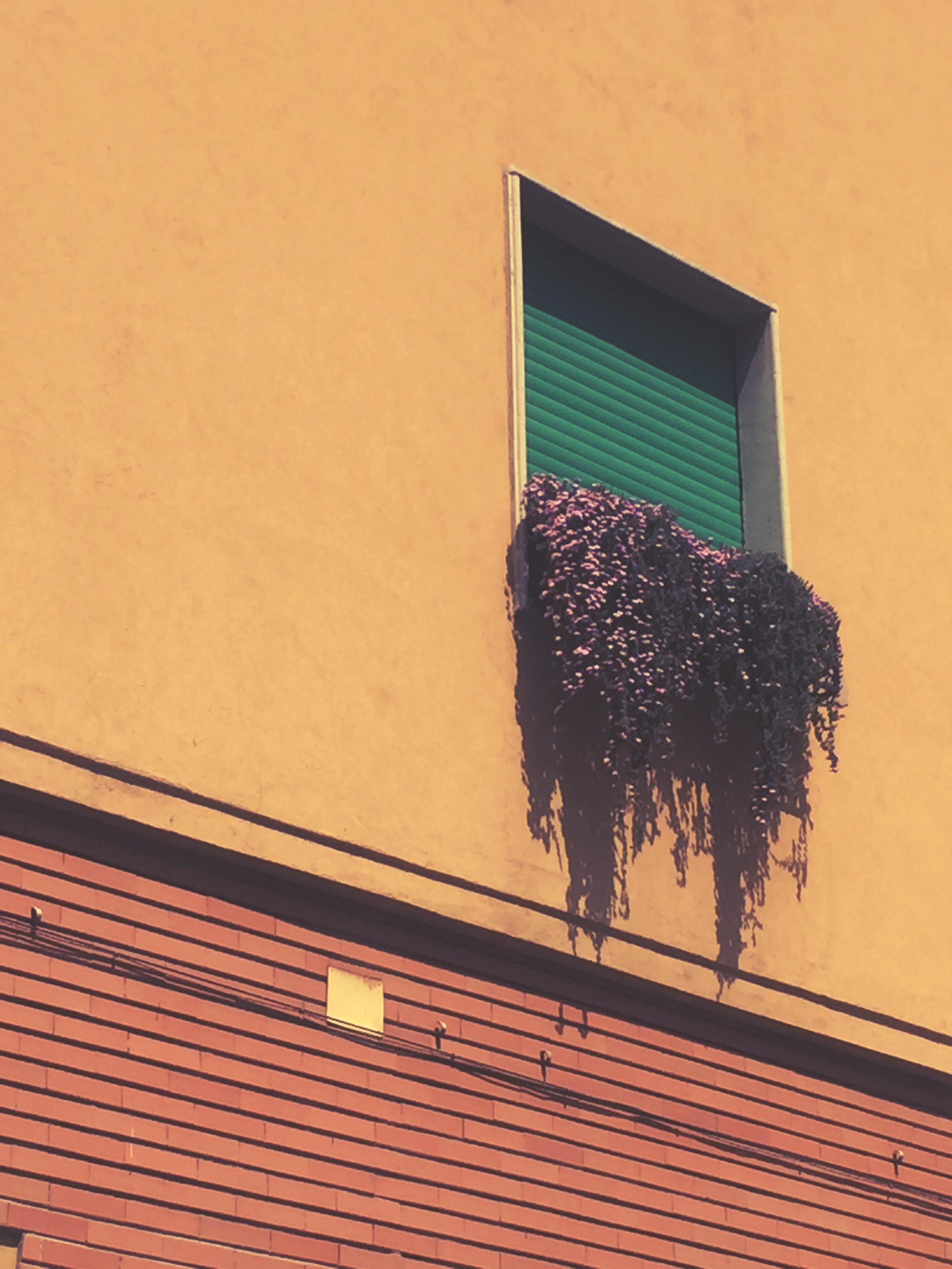 colourfull windows in Milan.jpg
