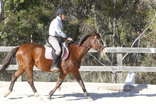 Adult Riding Lessons -