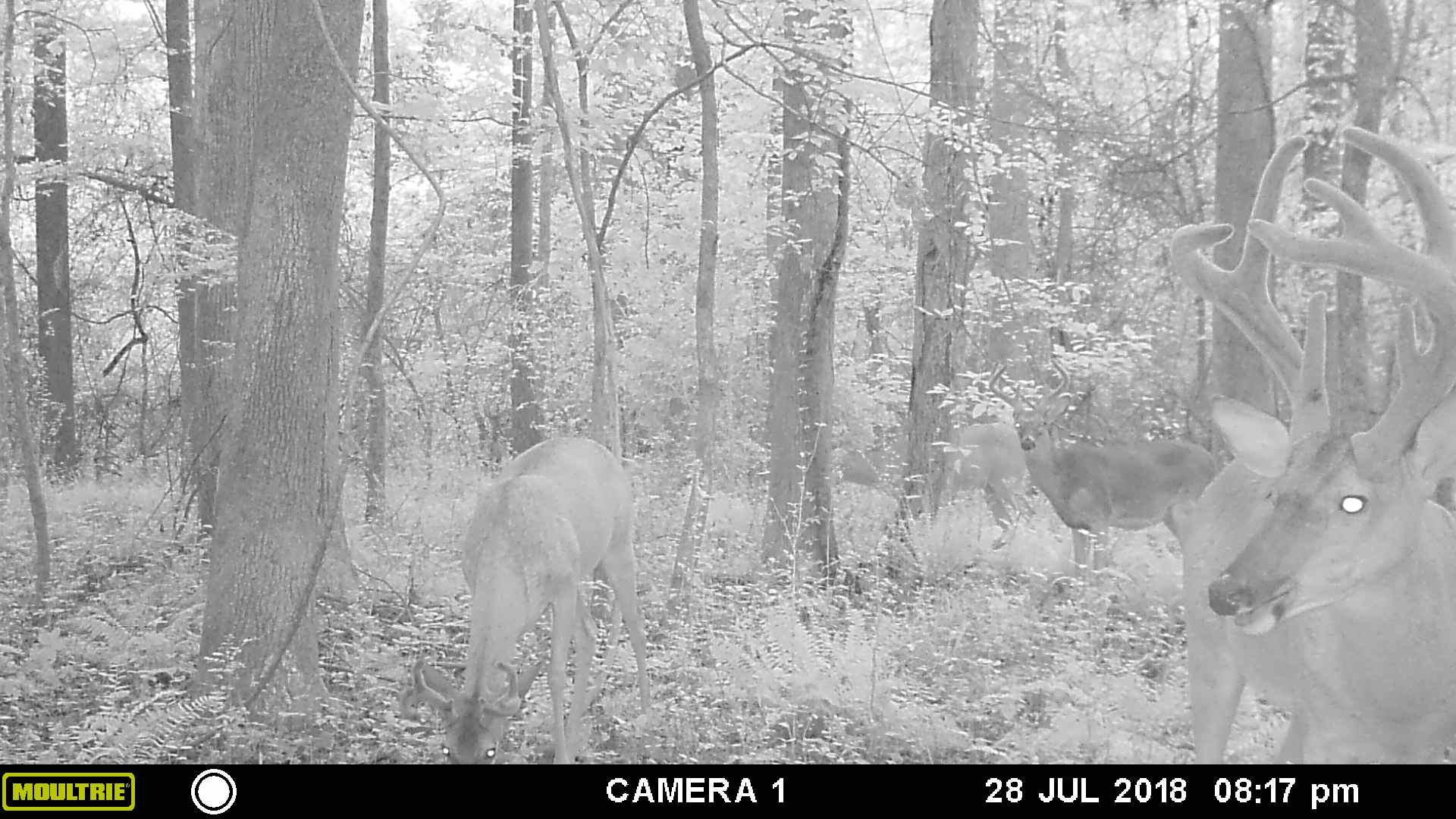 deer pic 2 - Copy.JPG