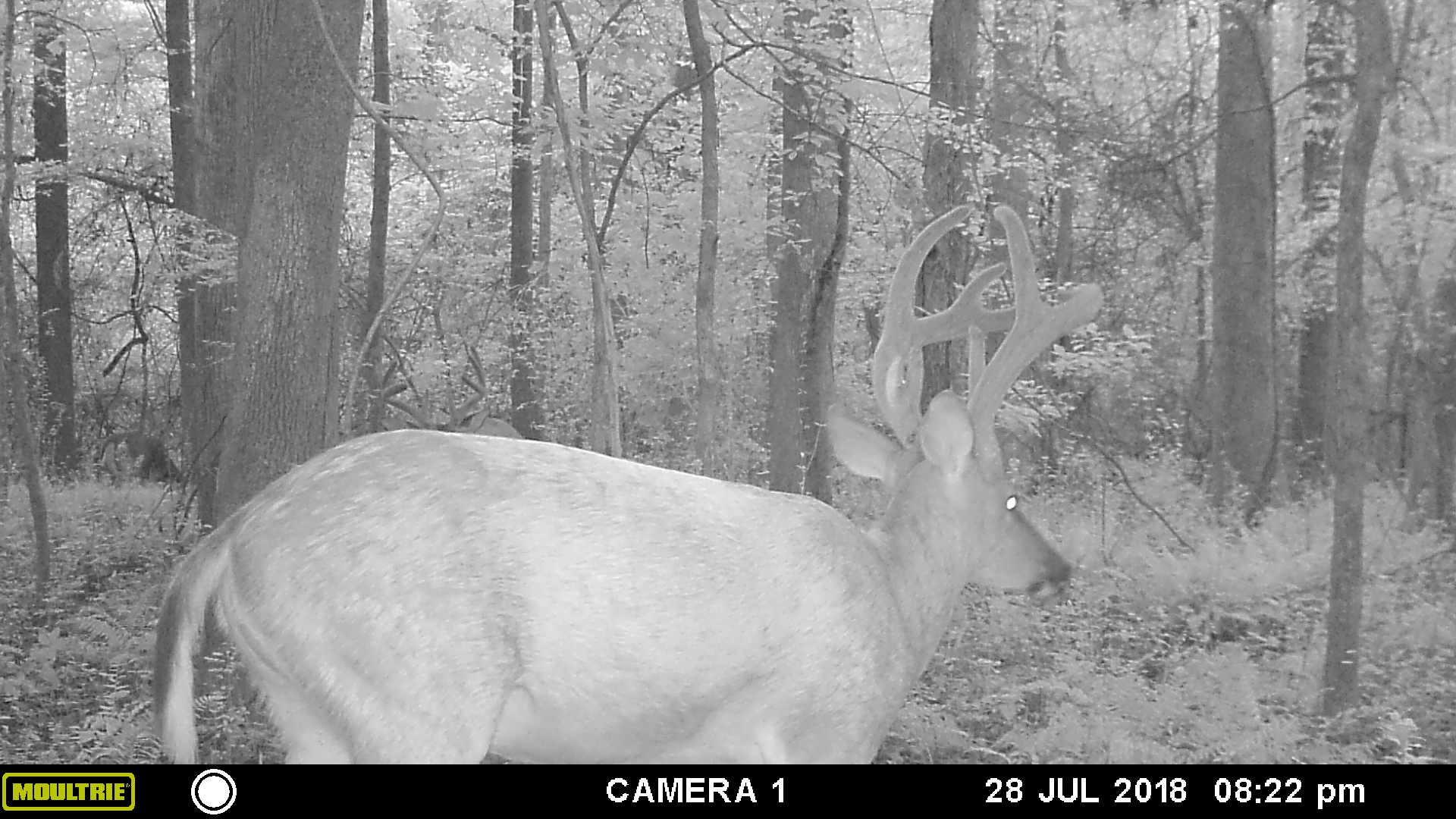 deer pic 4 - Copy.JPG
