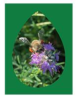 pollinator sm.png
