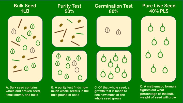 Pure Live Seed (PLS): is the percentage of viable seed in a given lot and is calculated by multiplying the purity (B. the amount of whole seed in a sample) by the germination (C. how much seed grows when tested).