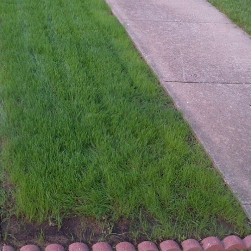 Habiturf   , The Native Turf Grass