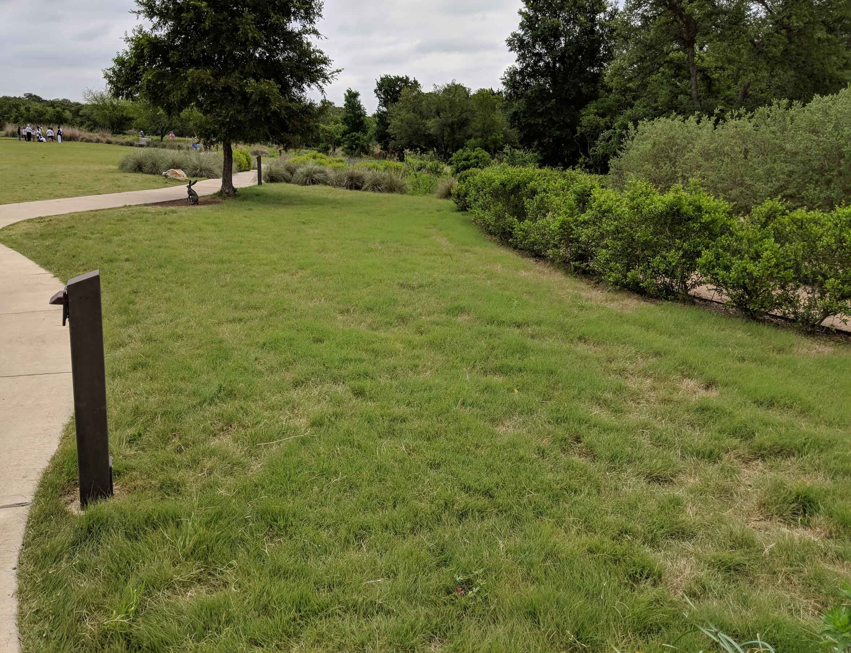 Buffalo grass field