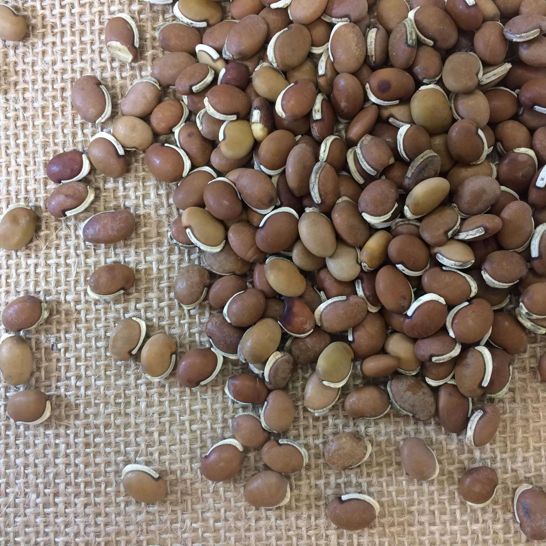 Lablab seeds