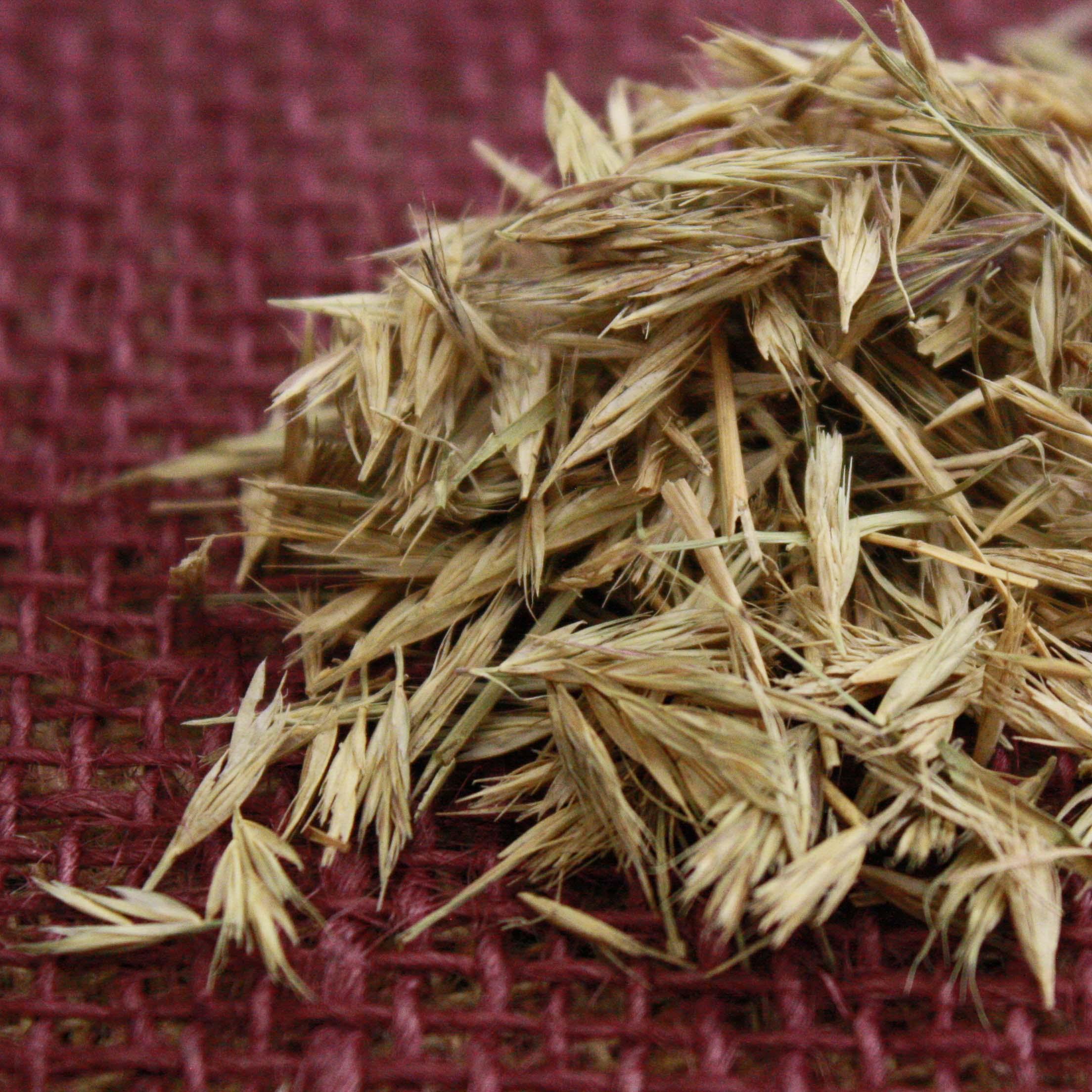 Dilley Slender Grama Seed