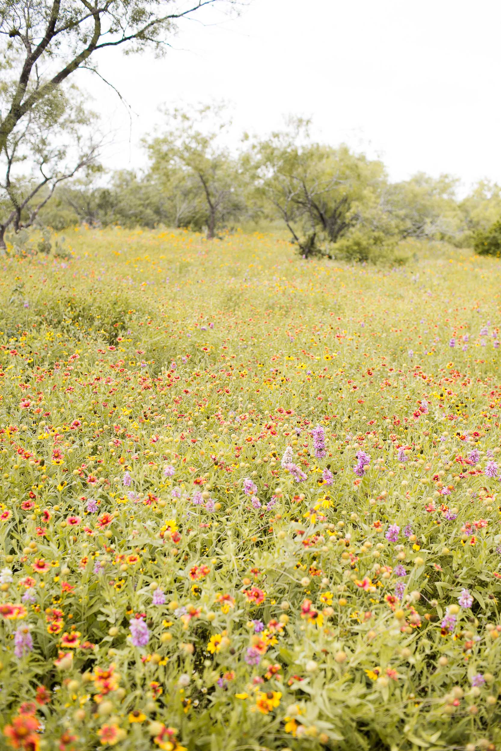 King's Wildflower Mix