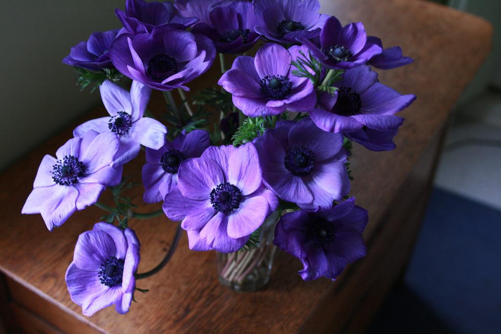 Anemone-Galilee-blue.jpg