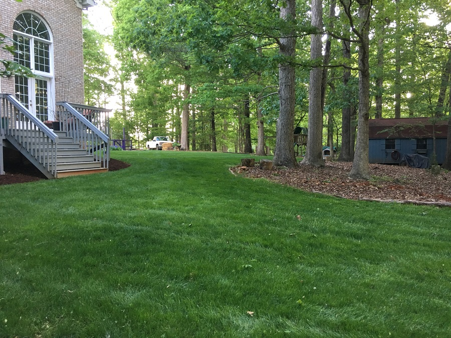 April 2019-Gorgeous grass, no visible weeds, and no bare spots!
