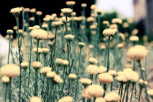 weeds.jpeg