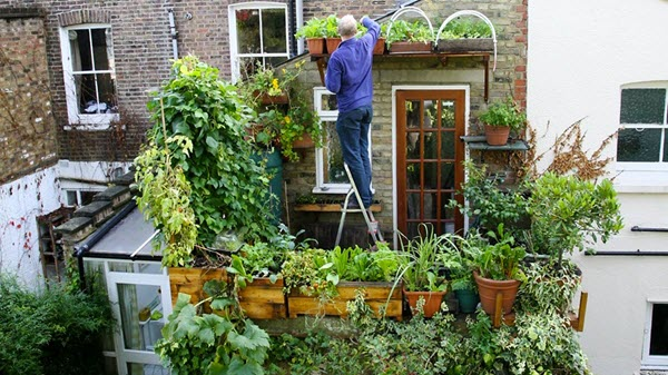 Mark's amazing container garden. Photo Credit: http://www.bbc.co.uk/