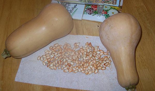 butternut squash seeds.JPG