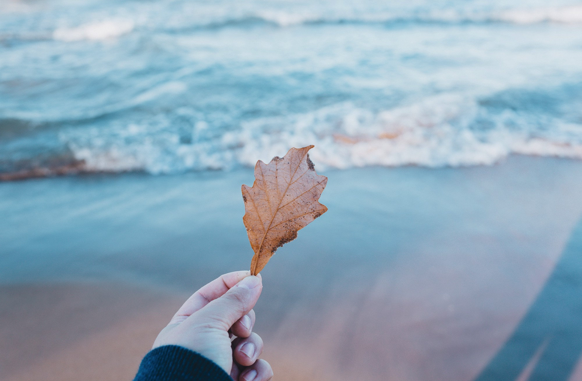 Young woman's hand holding brown leaf by lakeshore in autumn