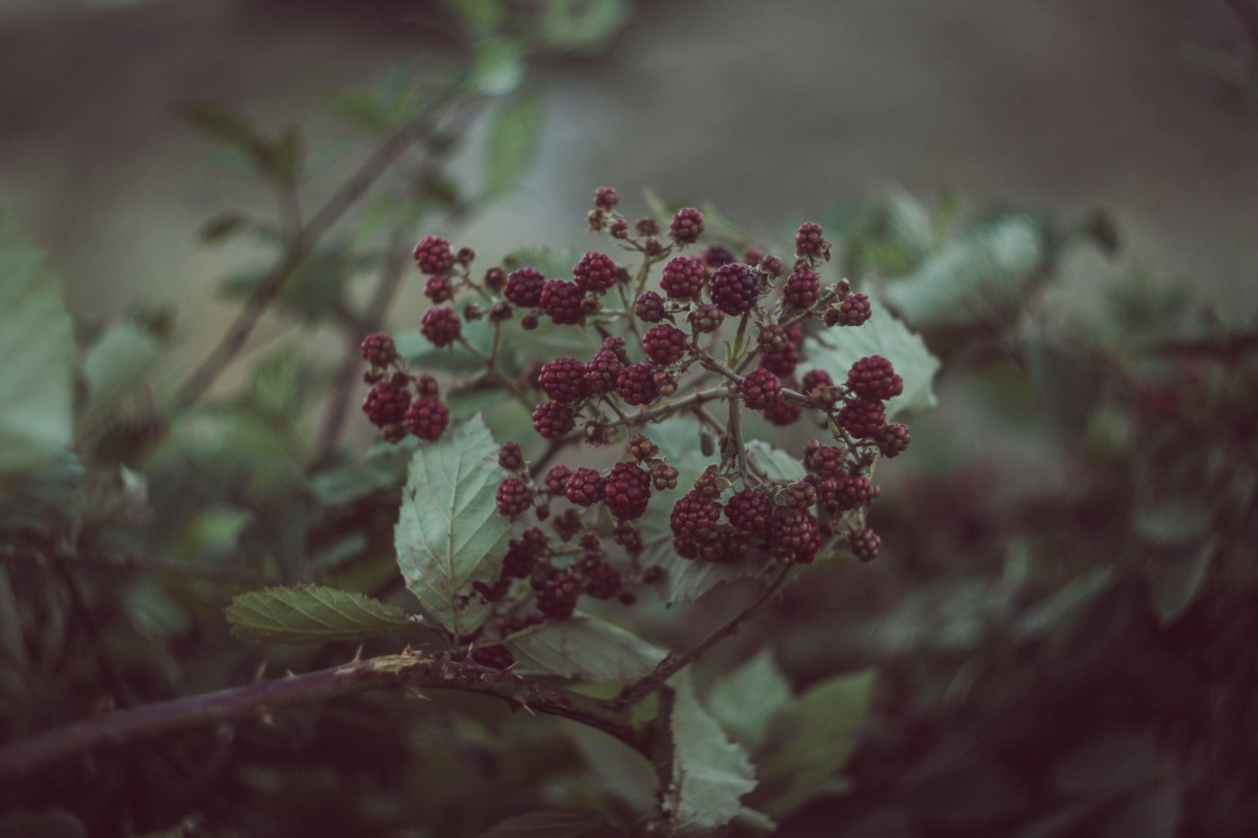 Photo by  Alina Chupakhina  on  Unsplash