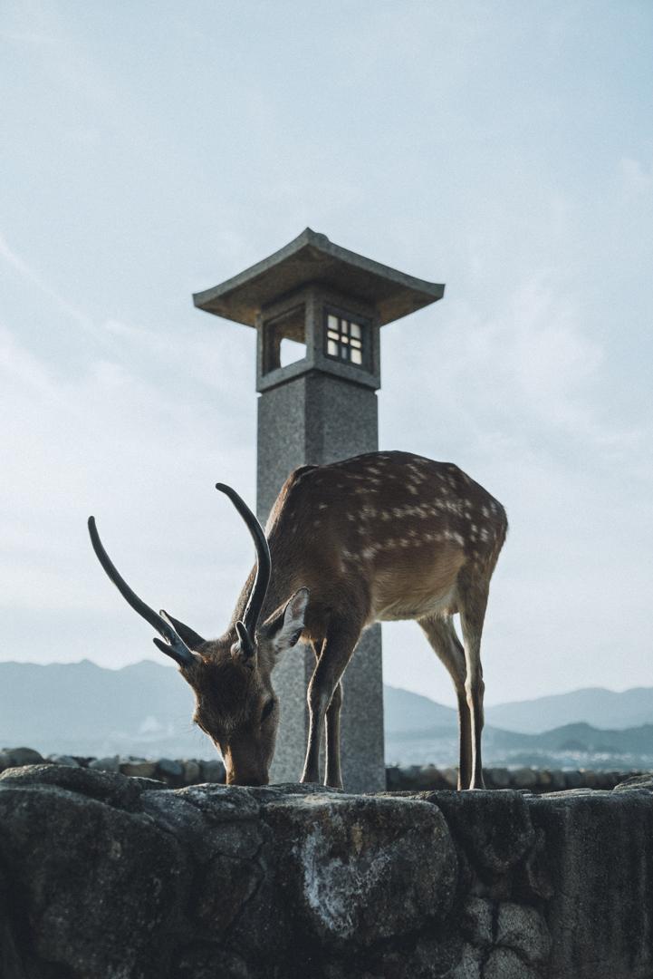 photographe-japon-15.jpg