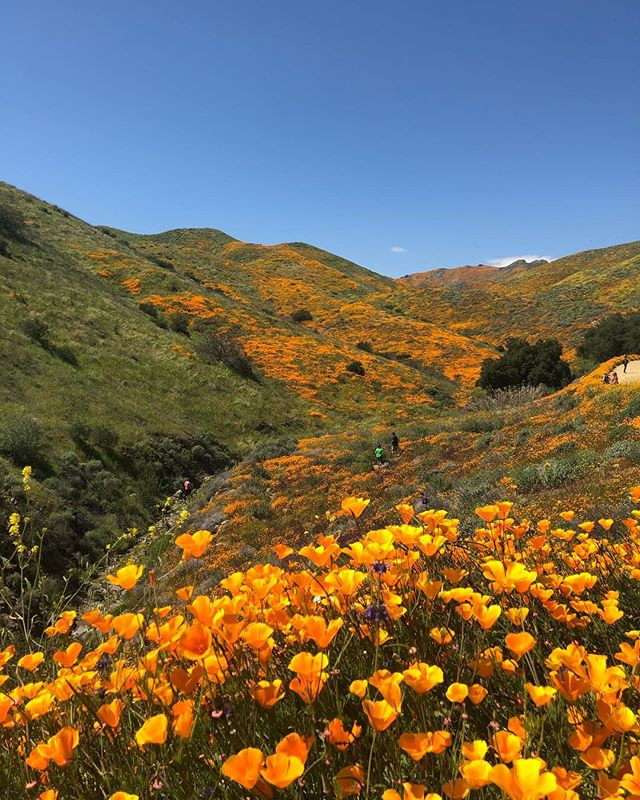 A shot of the #superbloom in Southern California. Hope everyone had a great weekend!