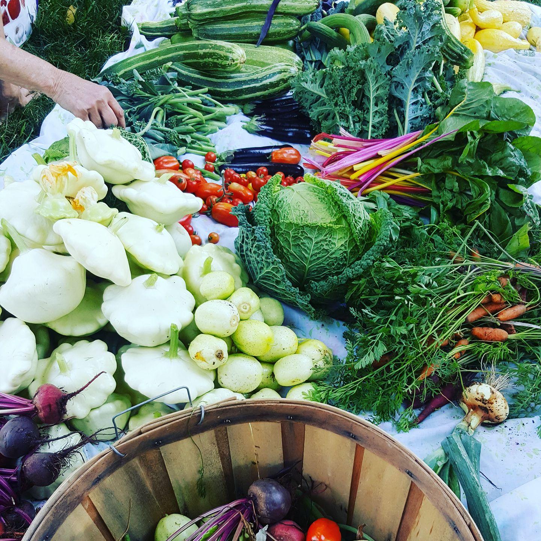 plenty veg.jpg
