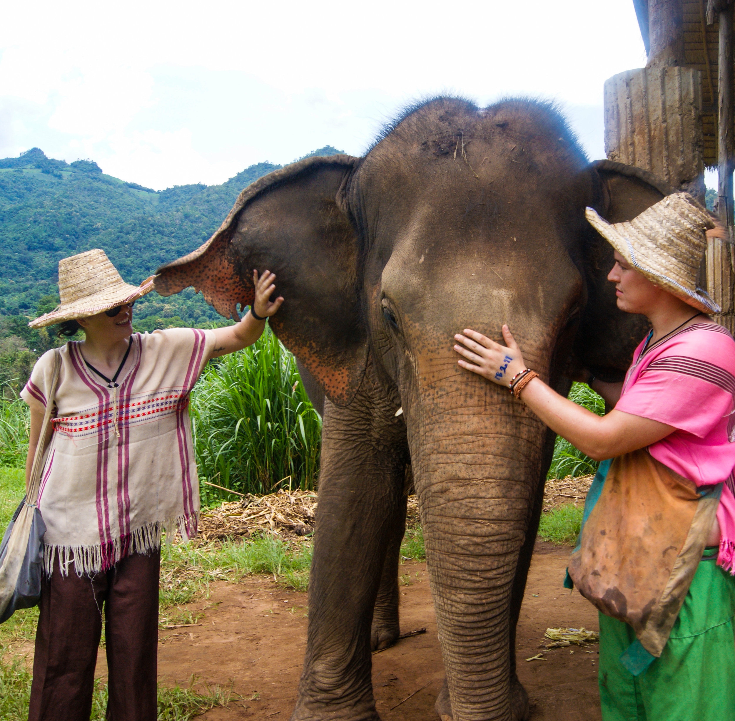 Happy Elephant Home - Chiang Mai
