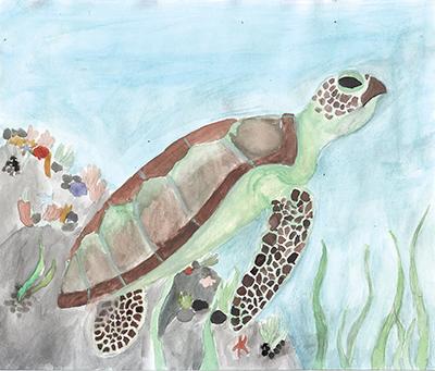 Atlantic Green Sea Turtle, Olivia Mannino