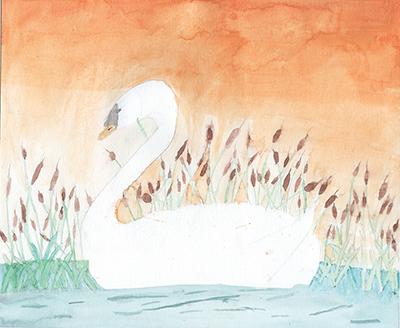 Mute Swan, Elian Chichanowicz