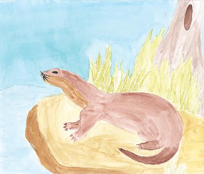 North American River Otter, Angel Perez
