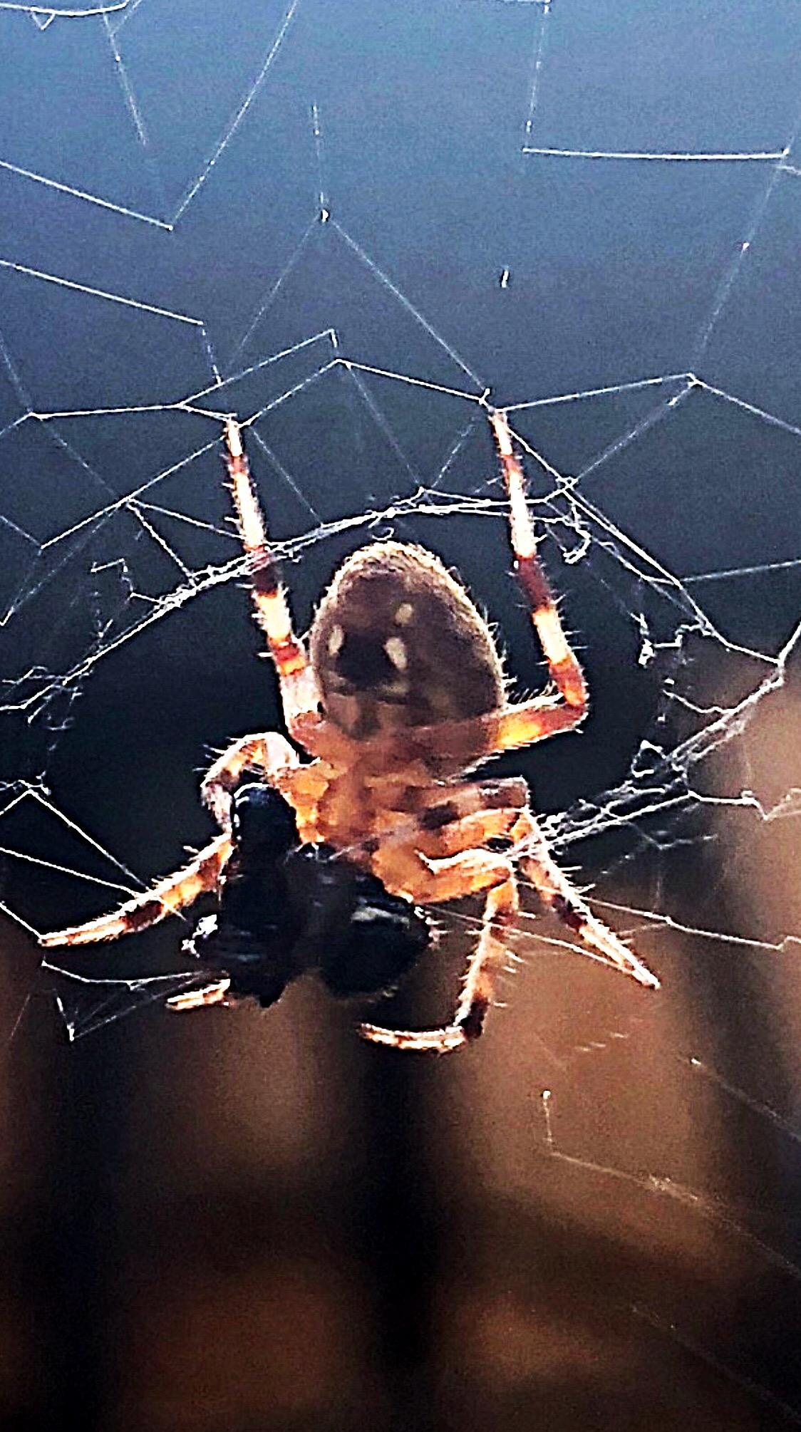 Emmi--WOW Spider.JPG