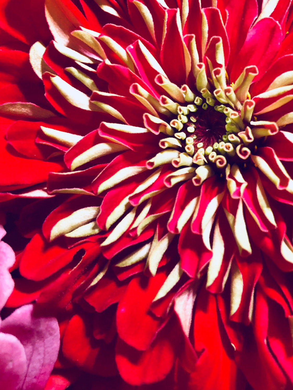 Emmi KW Red Flower.JPG