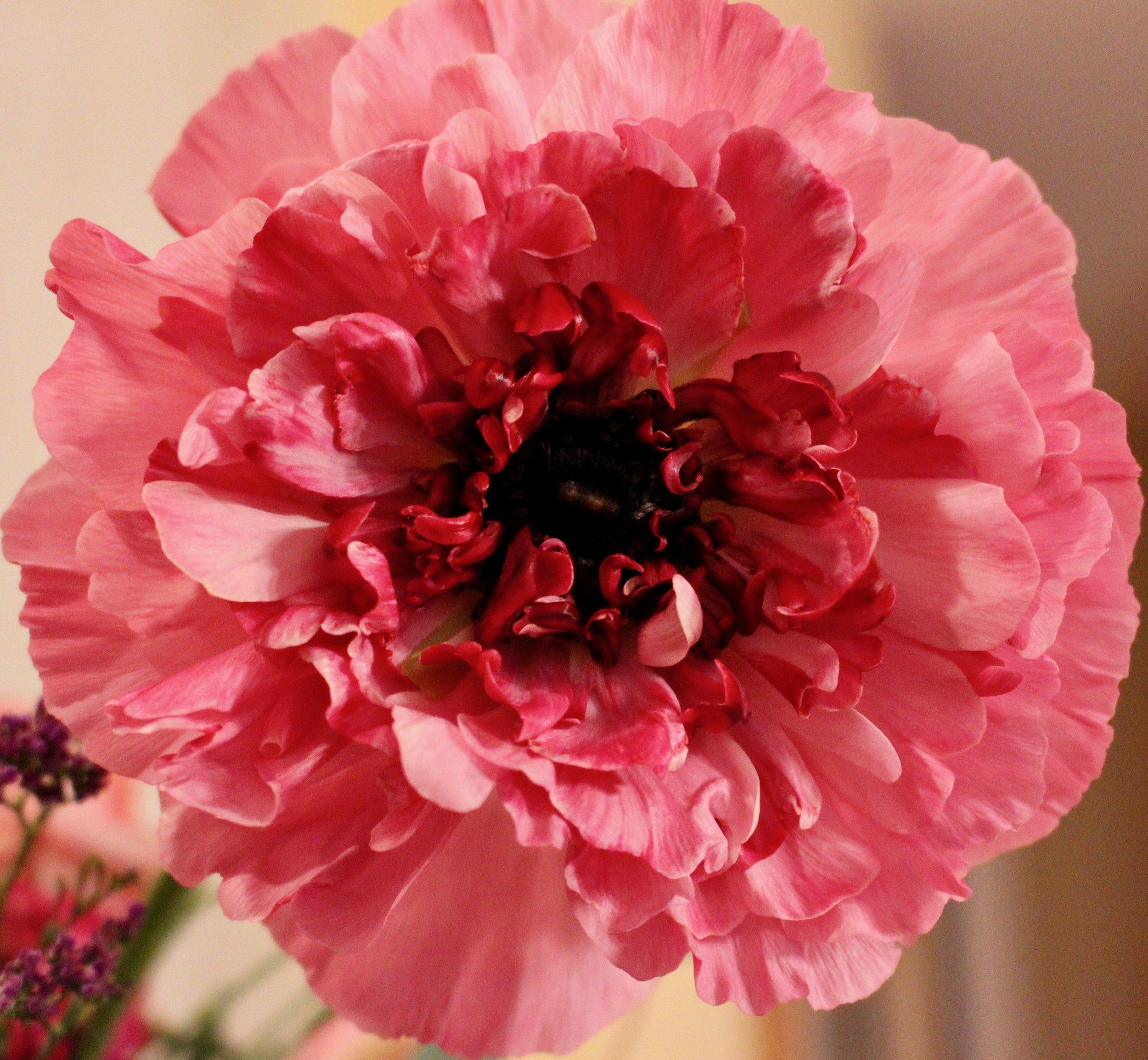 Noa's--Flowers' Edge.jpg