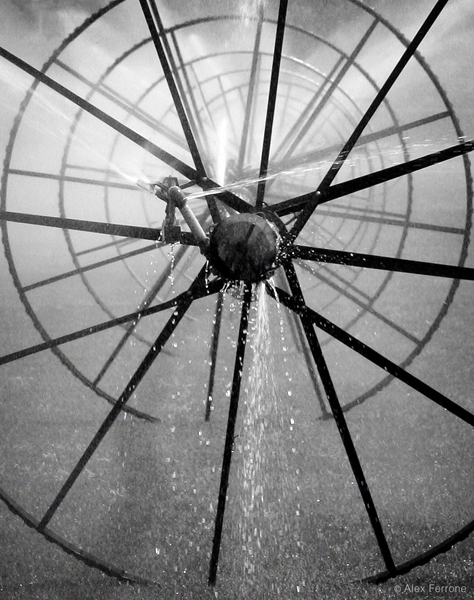 Sprinkler Wheel III by Alex Ferrone