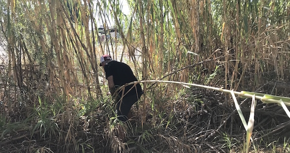 Harvesting arundo in the LA River