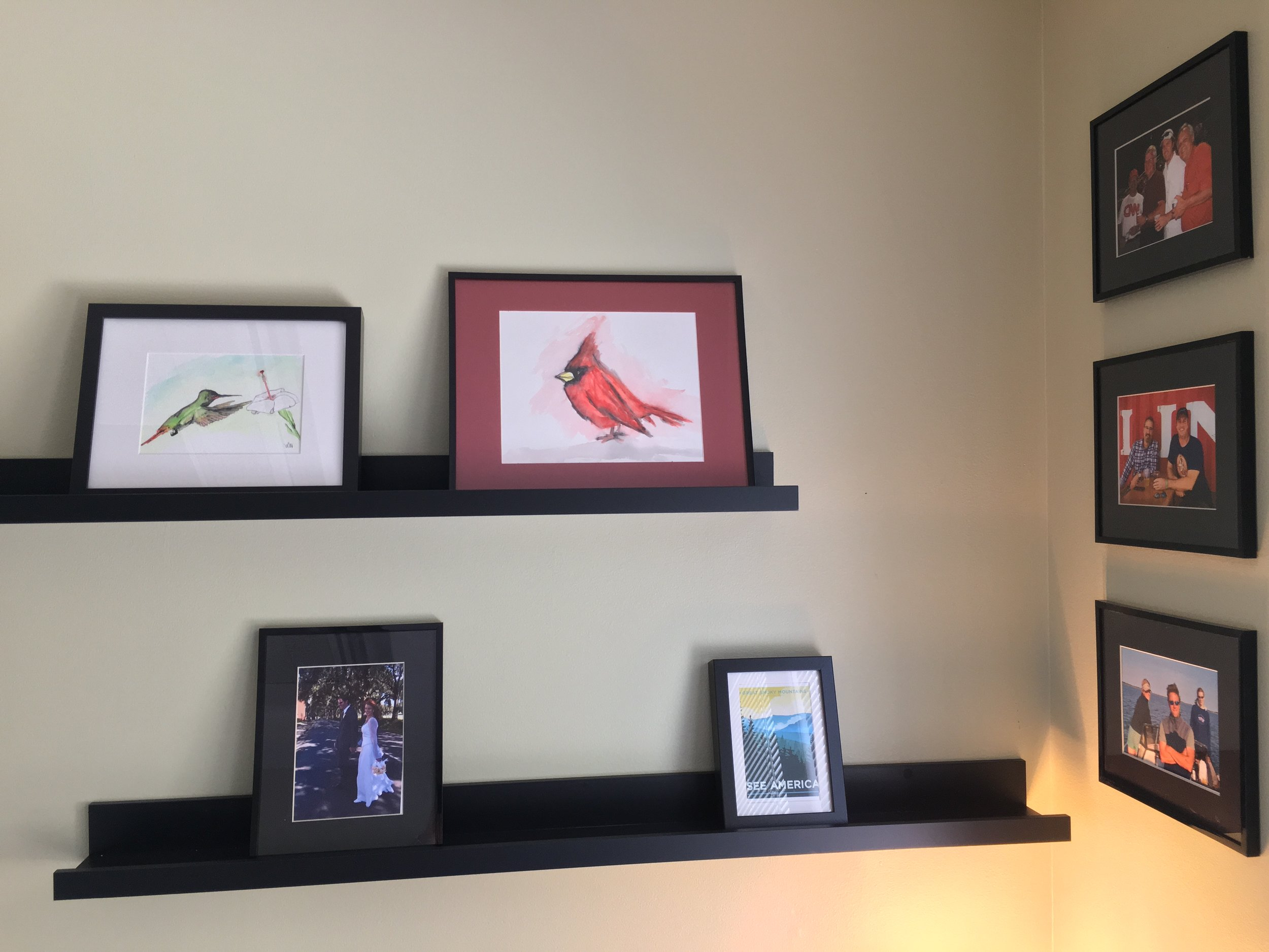 His rufus-tailed hummingbird and cardinal on my office wall...