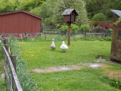 Lettershuna Riding Centre - Farm