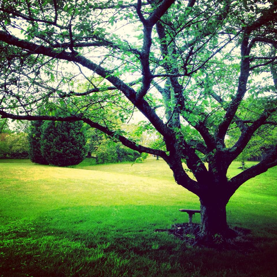 Catie Bee Tree